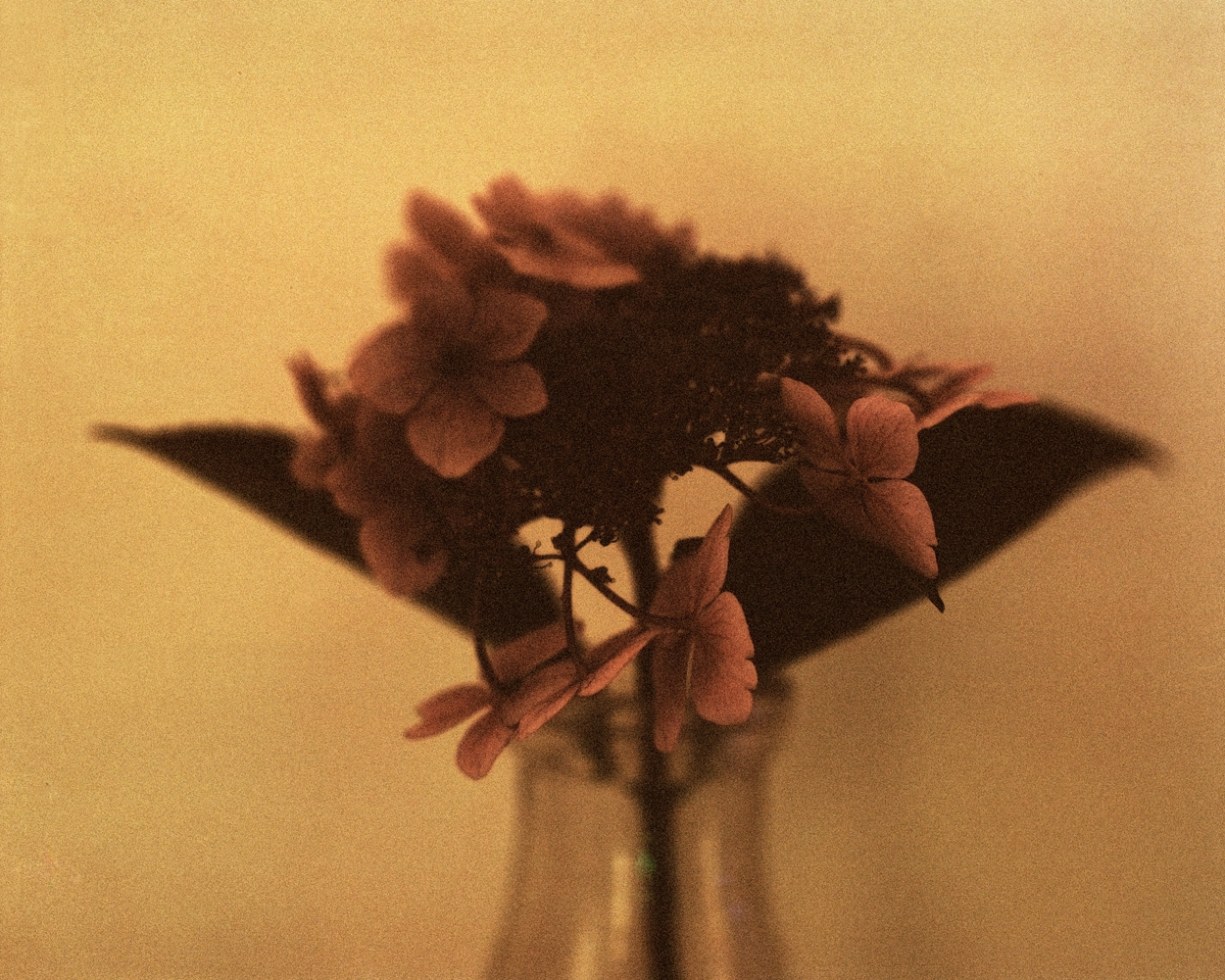 flower copy.jpg