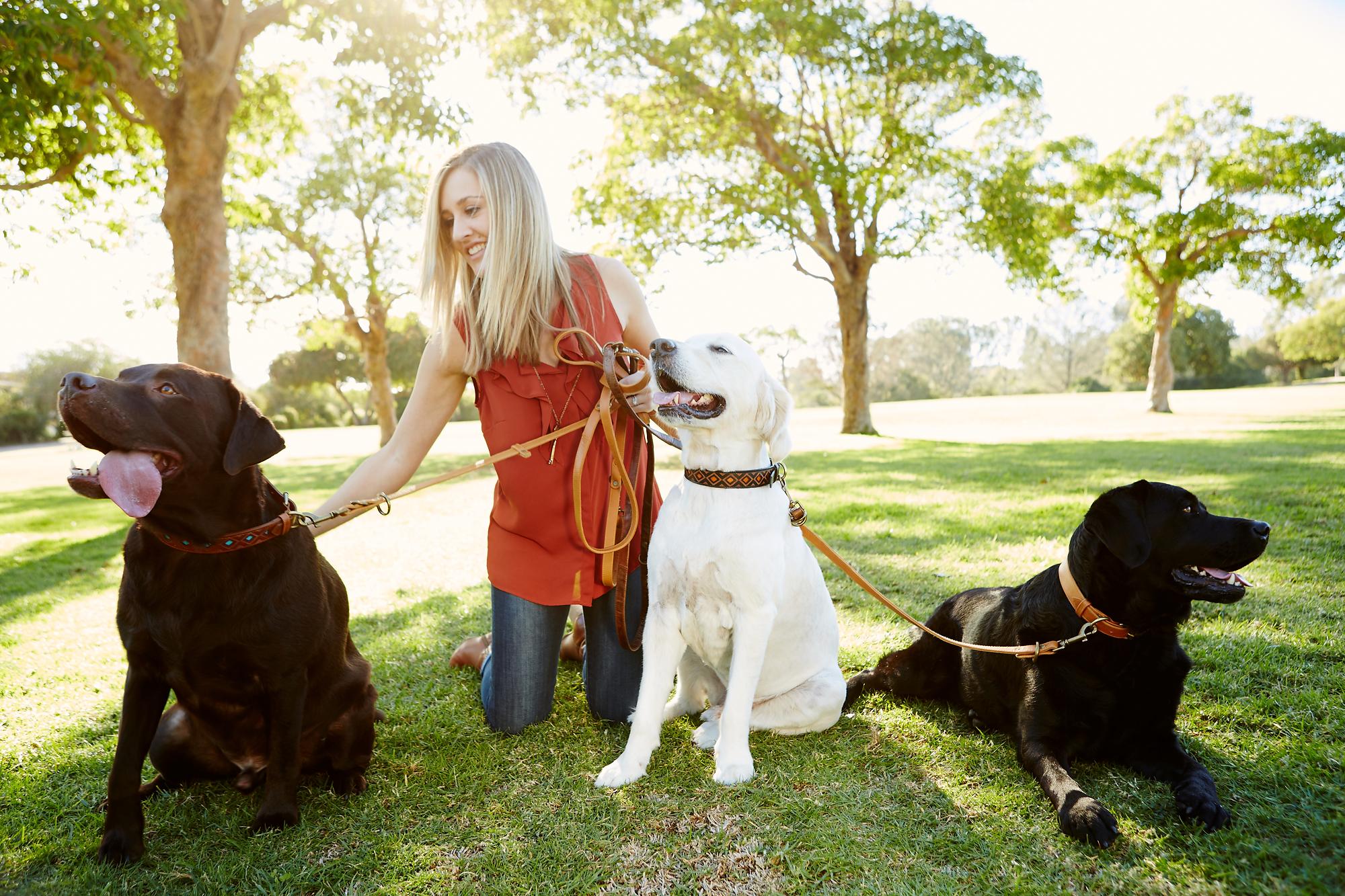 Aloha Collection Dog Collars