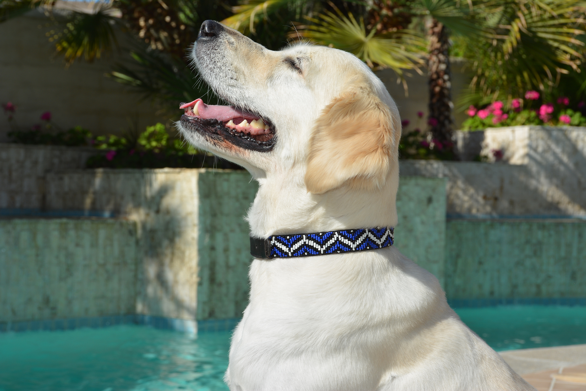 Bali Beaded Collection Dog Collars