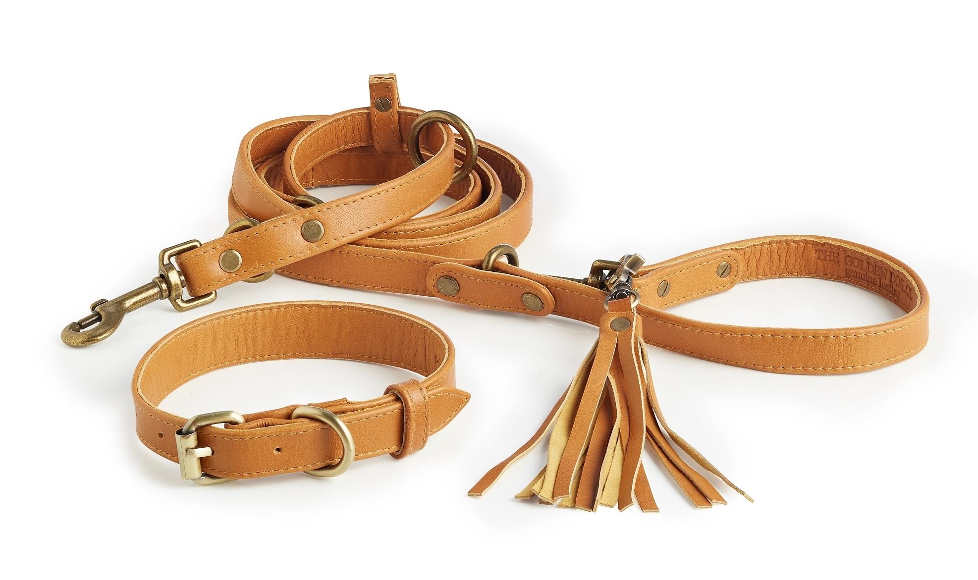 Topsail Collar + Leash