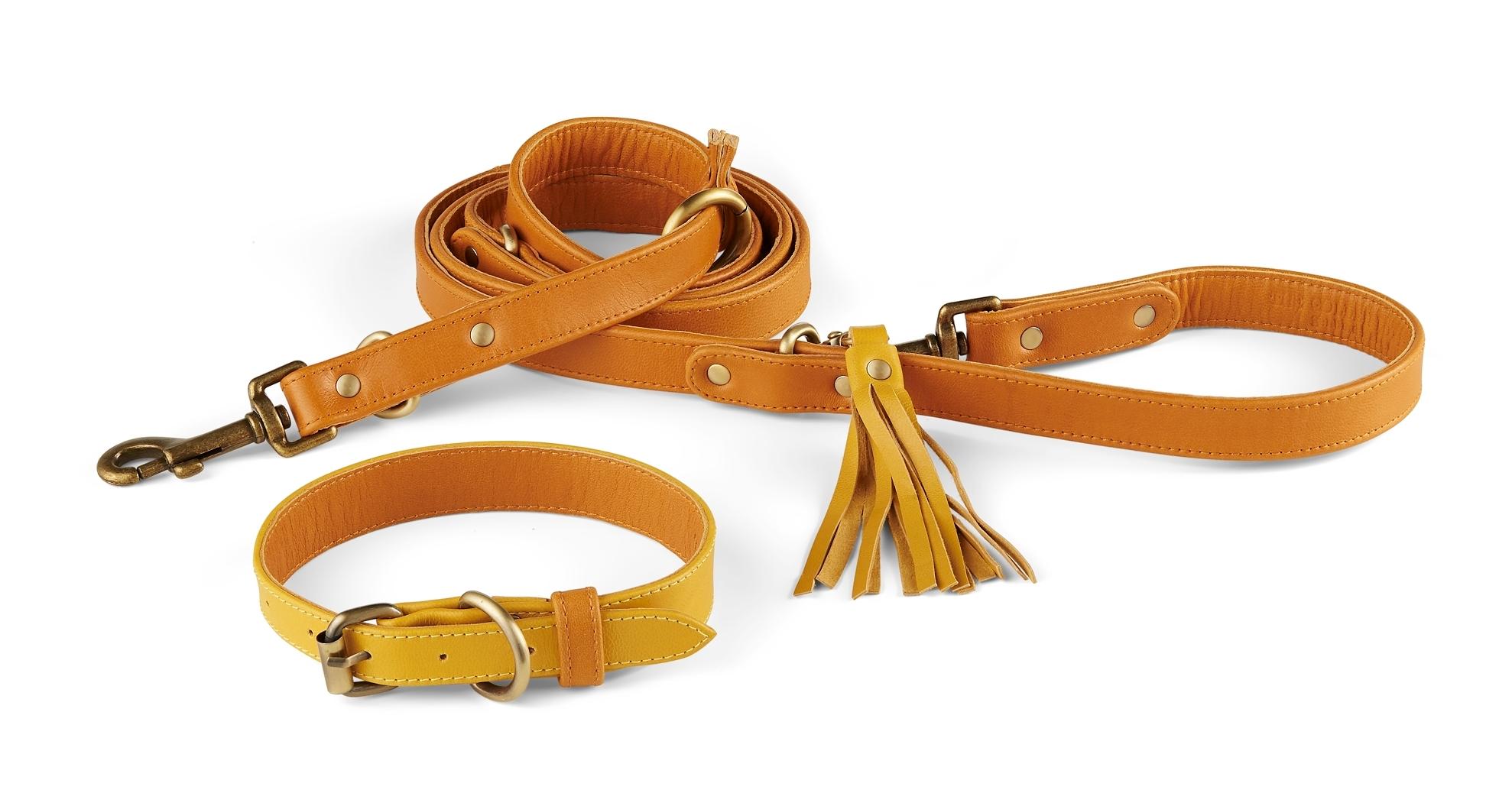 Holden Collar + Leash