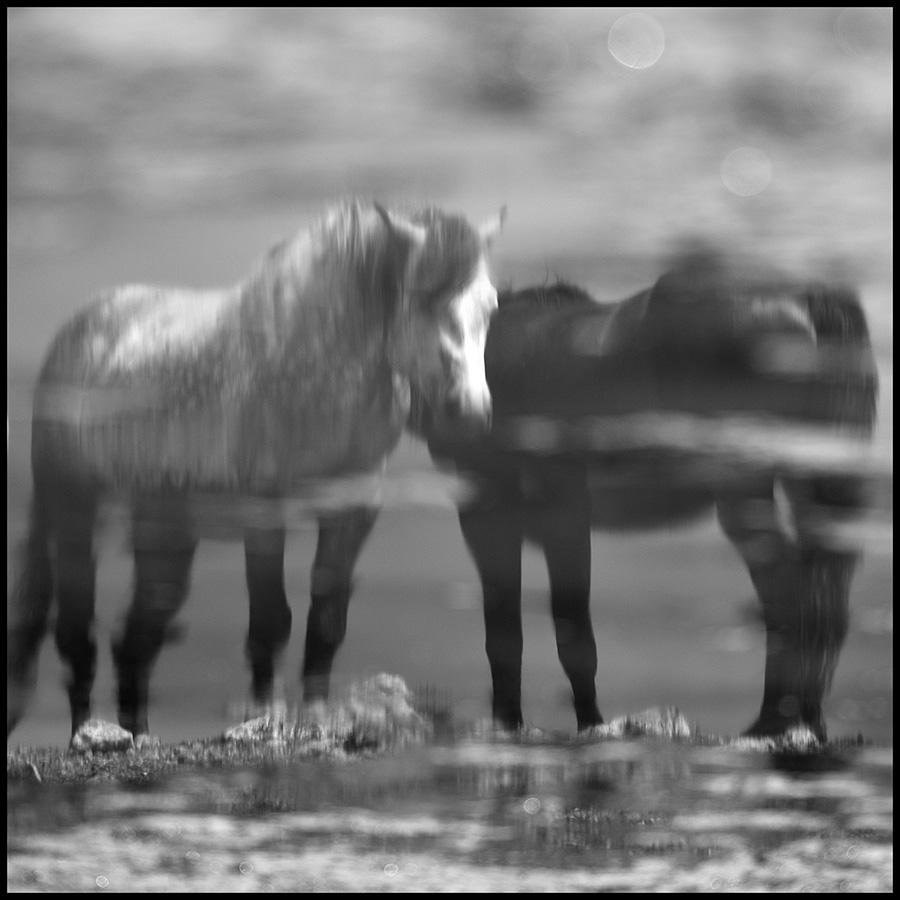 Wild horses © Midhat Poturovic  1.JPG