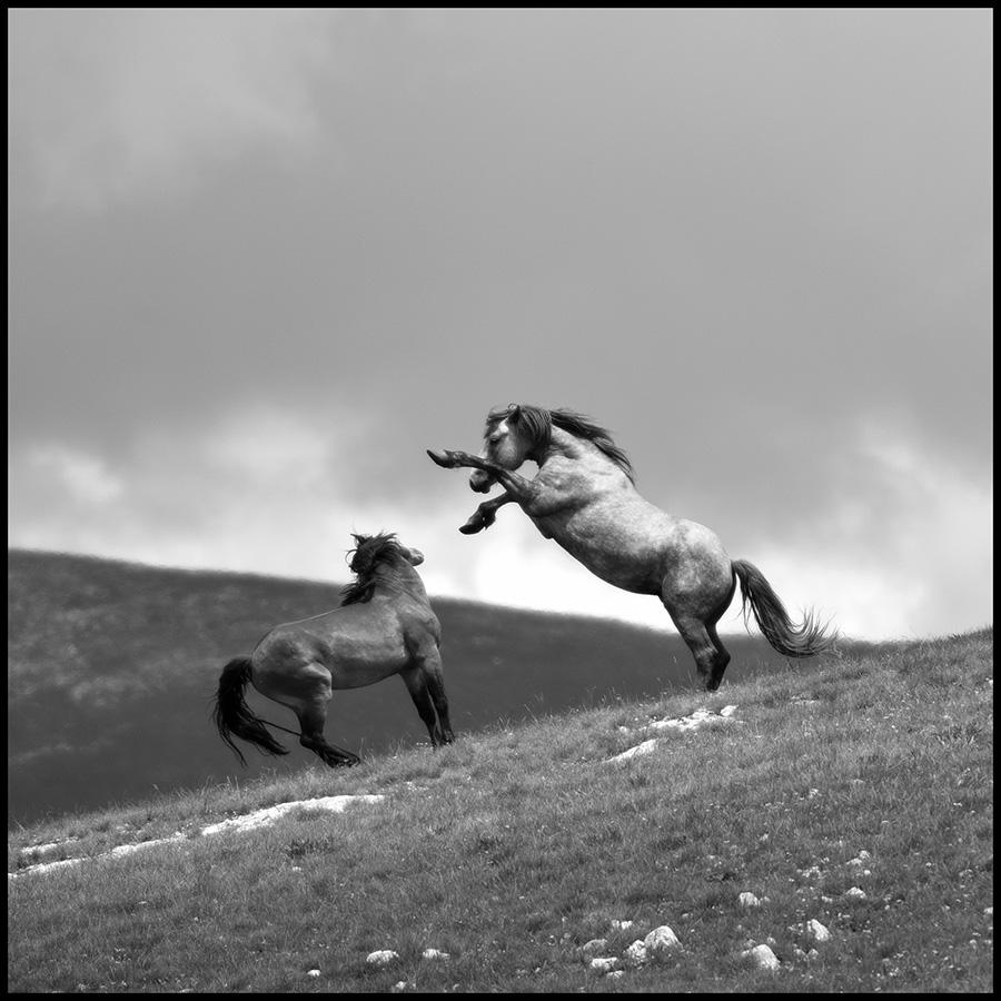 Wild horses © Midhat Poturovic  4.JPG