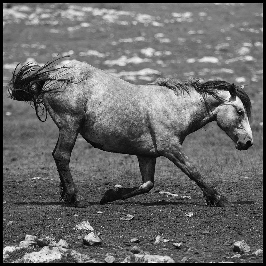 Wild horses © Midhat Poturovic  6.JPG