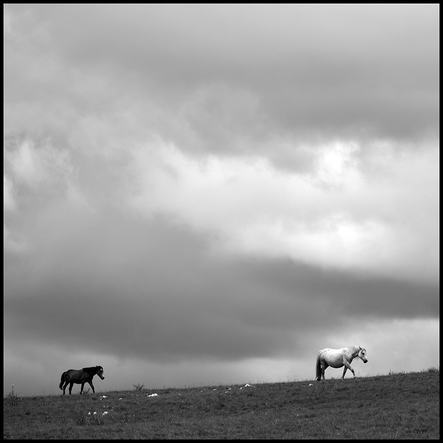 Wild horses © Midhat Poturovic  7.JPG