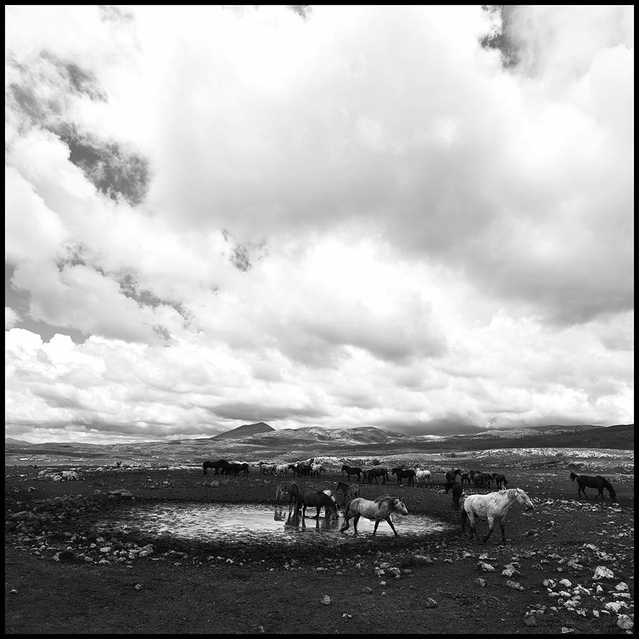 Wild horses © Midhat Poturovic  8.JPG