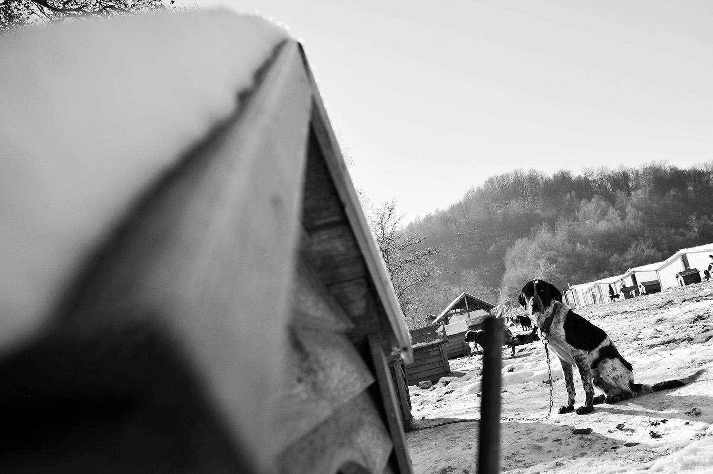 Stray dogs © Midhat Poturovic