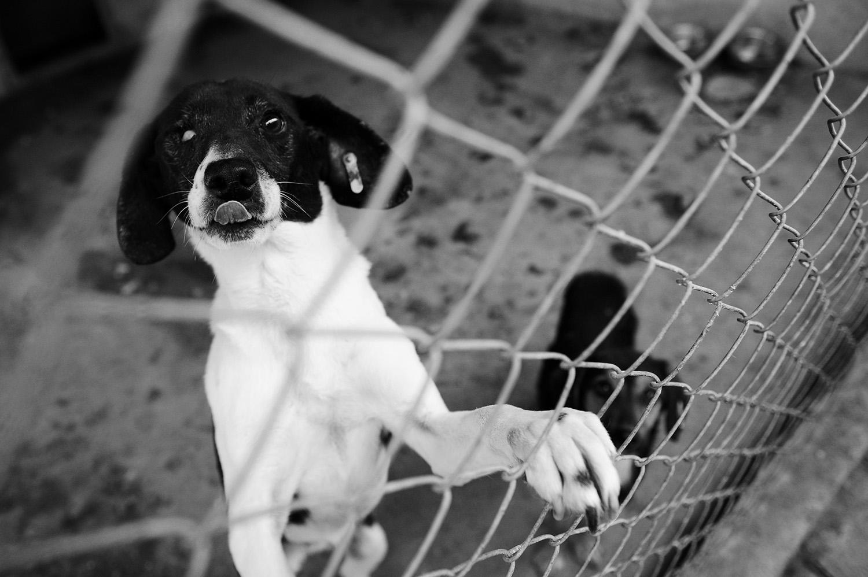 Stray dogs © Midhat Poturovic 5