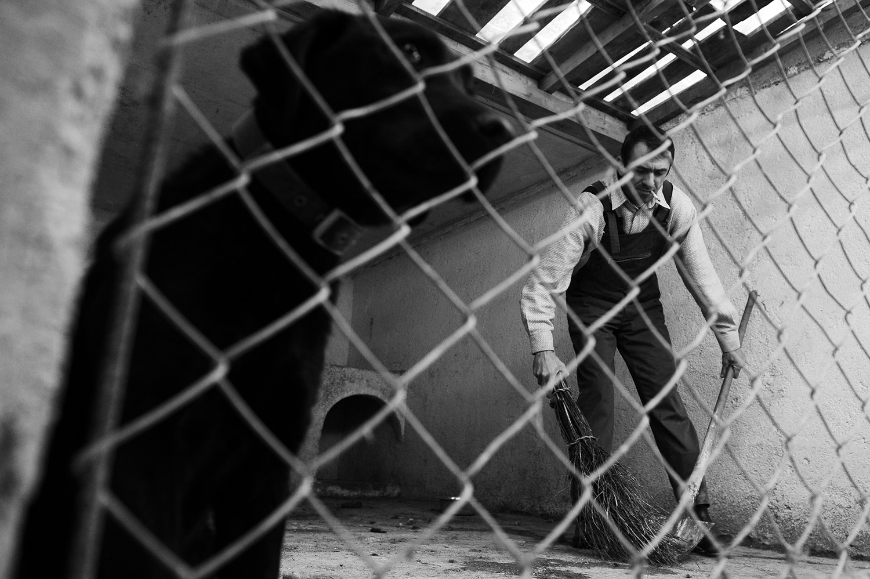 Stray dogs © Midhat Poturovic 7