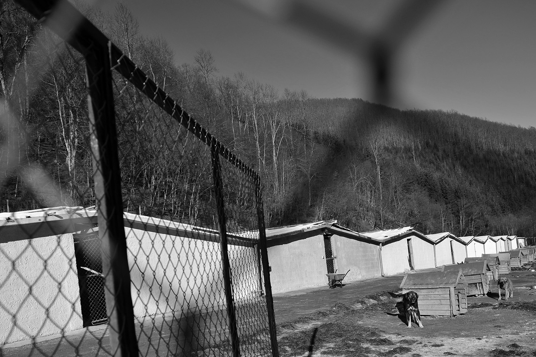 Stray dogs © Midhat Poturovic 10