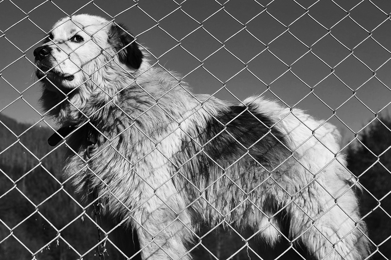 Stray dogs © Midhat Poturovic 9