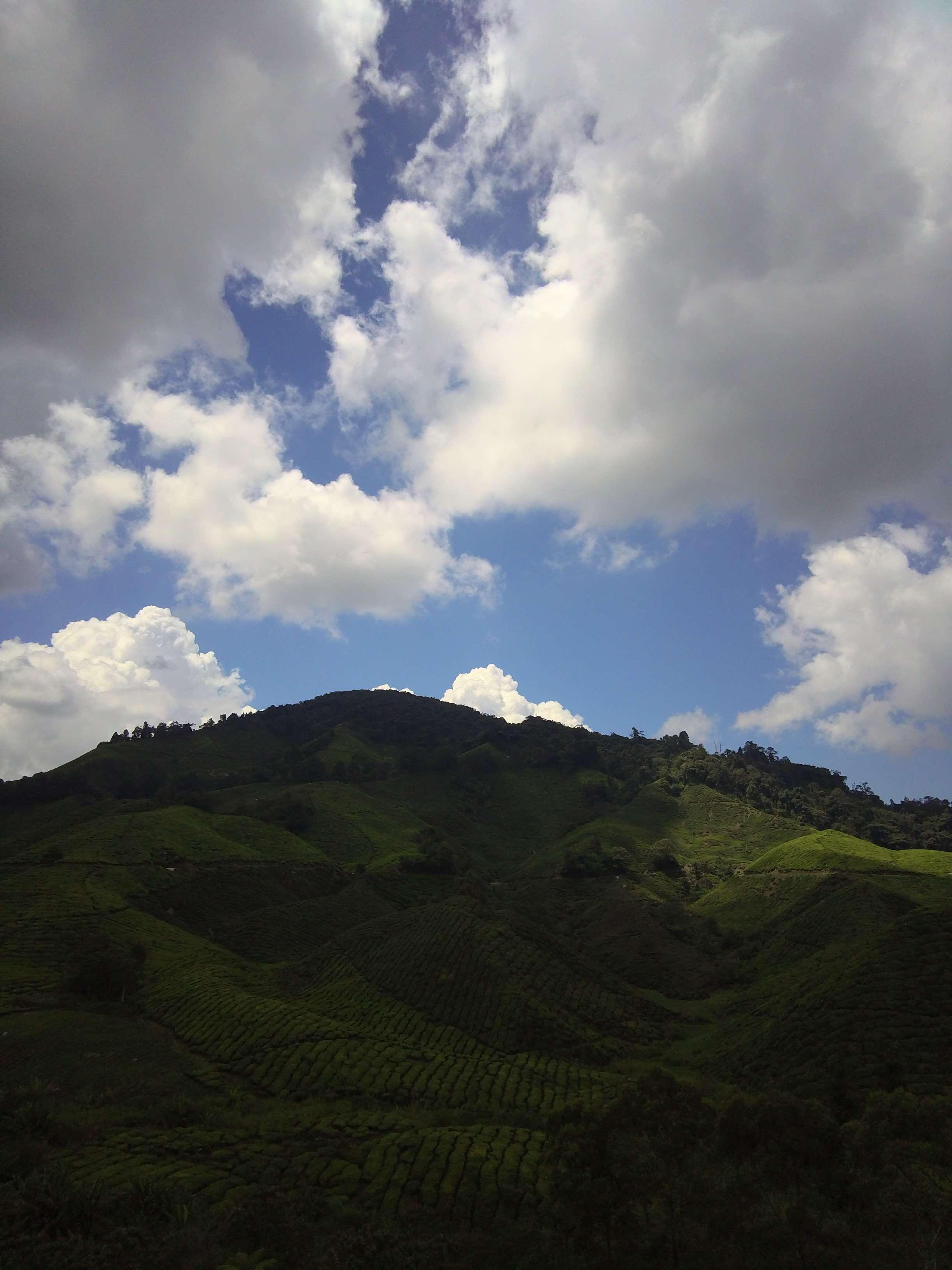 Walking to the Boh Tea Plantation