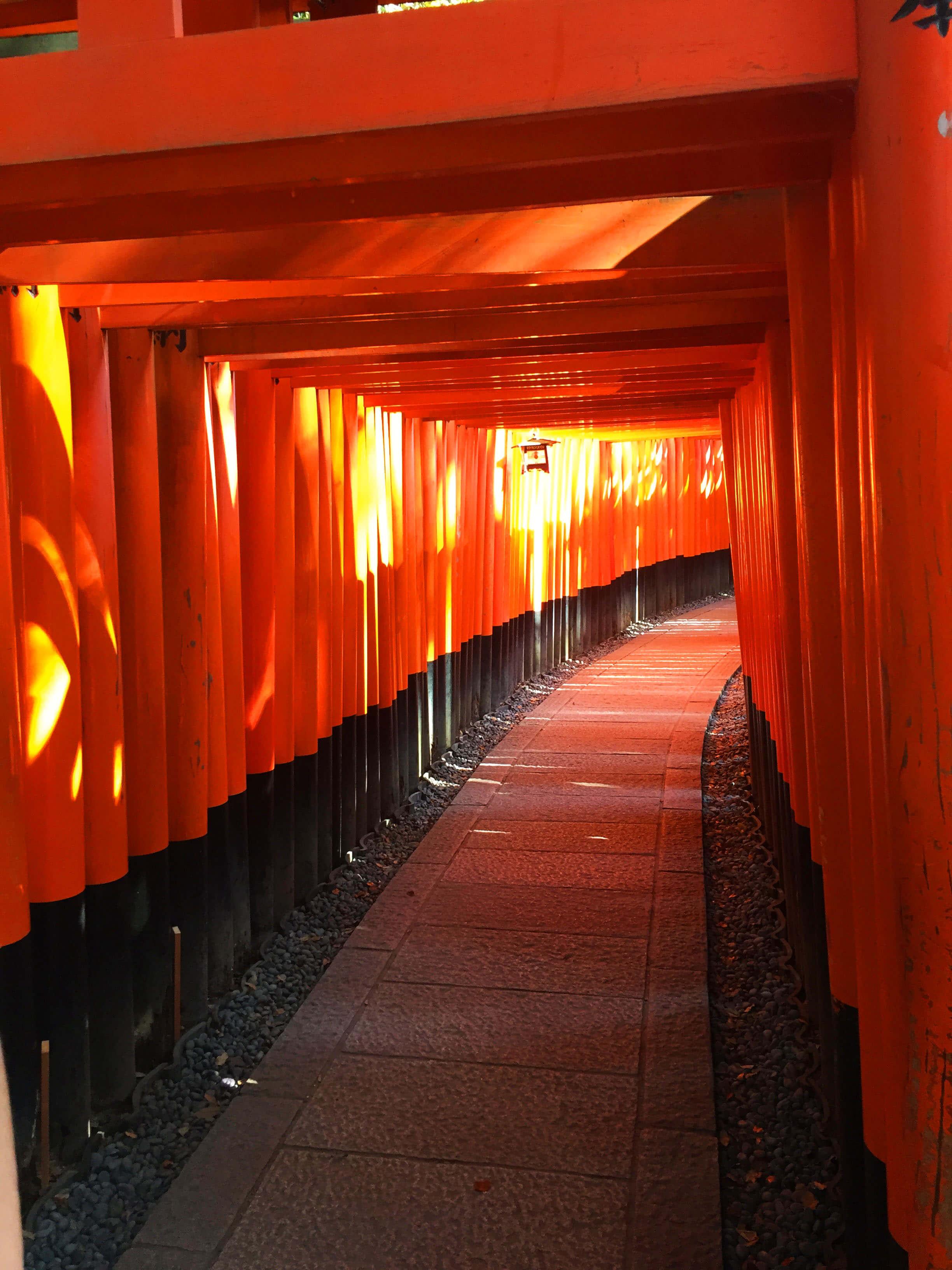 The tori gates going into the shrine