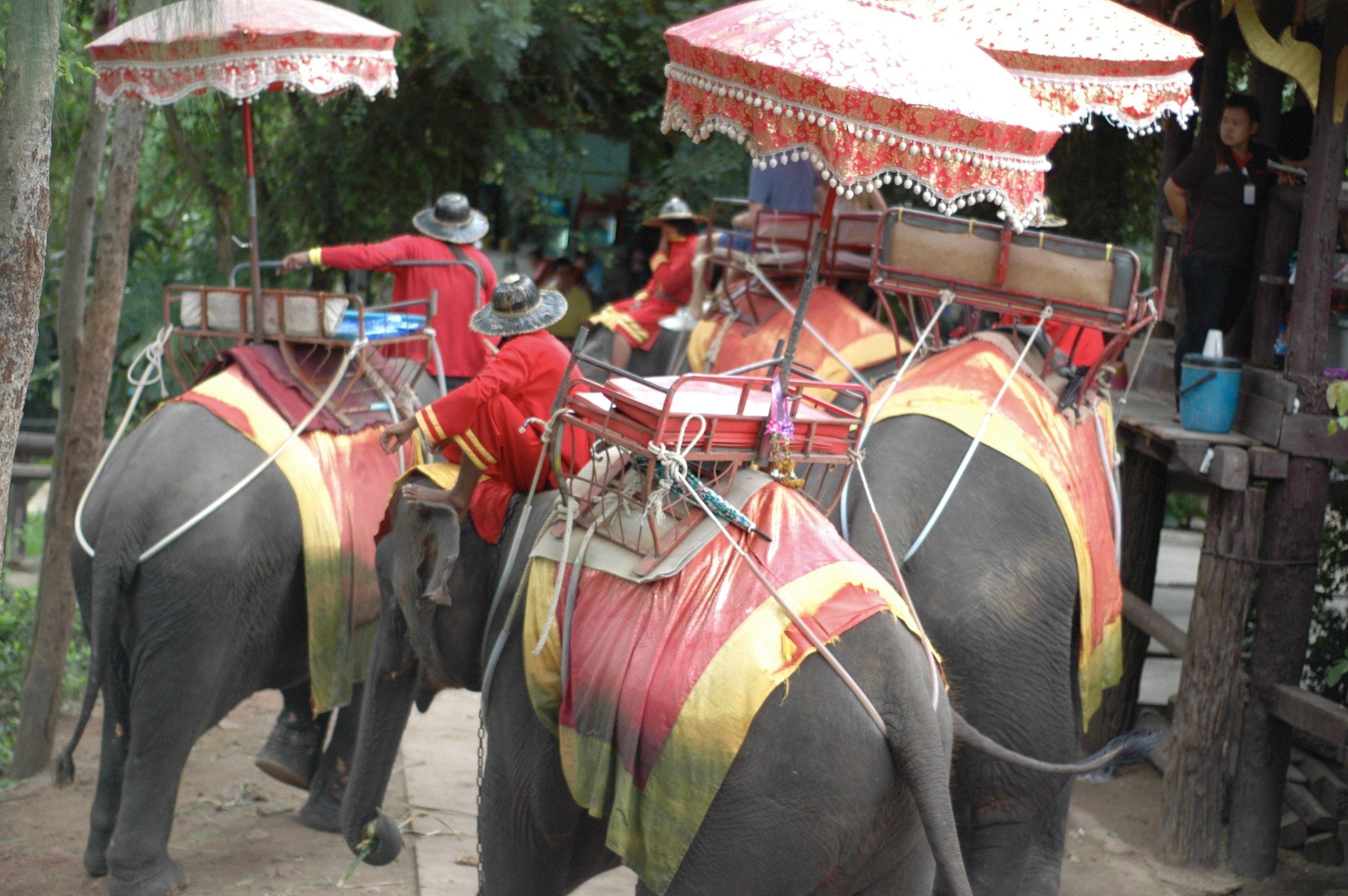 Grit Glam Grace - Ride an Elephant Thailand