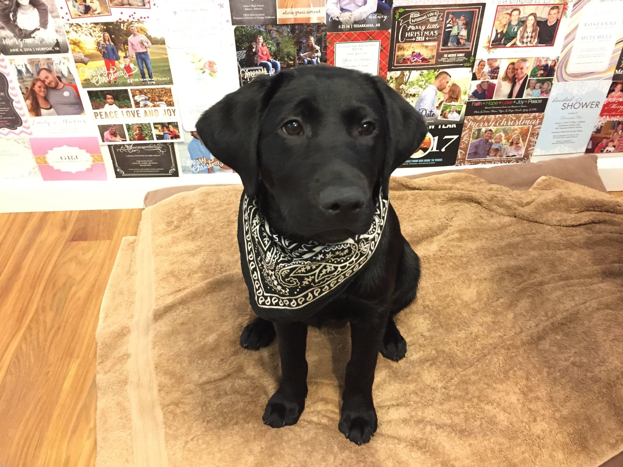 Smokey sporting a matching bandana