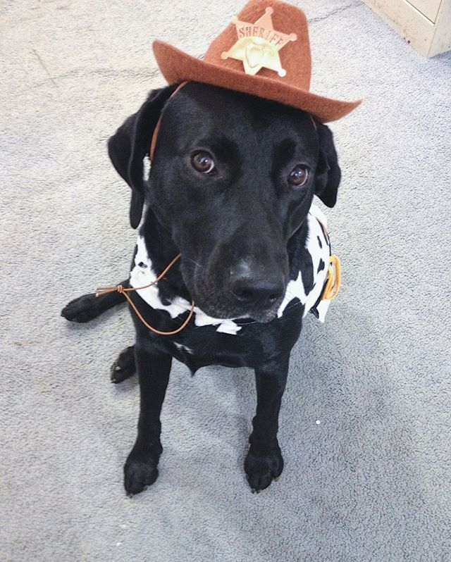 There's a new sheriff in town! Look out!! ⠀⠀⠀⠀⠀⠀⠀⠀⠀ ⠀⠀⠀⠀⠀⠀⠀⠀⠀ We'd like you to formally meet Smokey's brother Buck!⠀⠀⠀⠀⠀⠀⠀⠀⠀ ⠀⠀⠀⠀⠀⠀⠀⠀⠀ Buck is older than Smokey but you'd never know it! He's still a child at heart and even though this photo doesn't show it he LOVEs giving his input in helping pick out his halloween costume.⠀⠀⠀⠀⠀⠀⠀⠀⠀ ⠀⠀⠀⠀⠀⠀⠀⠀⠀ While this is from a year or two ago sometimes it's helpful to go back down memory lane to spark new ideas or remind you of an idea you'd forgotten about. Here's to hoping this sparks some inspo in Buck. ⠀⠀⠀⠀⠀⠀⠀⠀⠀ •⠀⠀⠀⠀⠀⠀⠀⠀⠀ •⠀⠀⠀⠀⠀⠀⠀⠀⠀ •⠀⠀⠀⠀⠀⠀⠀⠀⠀ •⠀⠀⠀⠀⠀⠀⠀⠀⠀ •⠀⠀⠀⠀⠀⠀⠀⠀⠀ •⠀⠀⠀⠀⠀⠀⠀⠀⠀ •⠀⠀⠀⠀⠀⠀⠀⠀⠀ •⠀⠀⠀⠀⠀⠀⠀⠀⠀ •⠀⠀⠀⠀⠀⠀⠀⠀⠀ •⠀⠀⠀⠀⠀⠀⠀⠀⠀ •⠀⠀⠀⠀⠀⠀⠀⠀⠀ •⠀⠀⠀⠀⠀⠀⠀⠀⠀ •⠀⠀⠀⠀⠀⠀⠀⠀⠀ #HHCostume2019 #labsofinstagram #labsofNYC #dogsofinsta #helpinghand #womansbestfriend #studiodogs #doggos