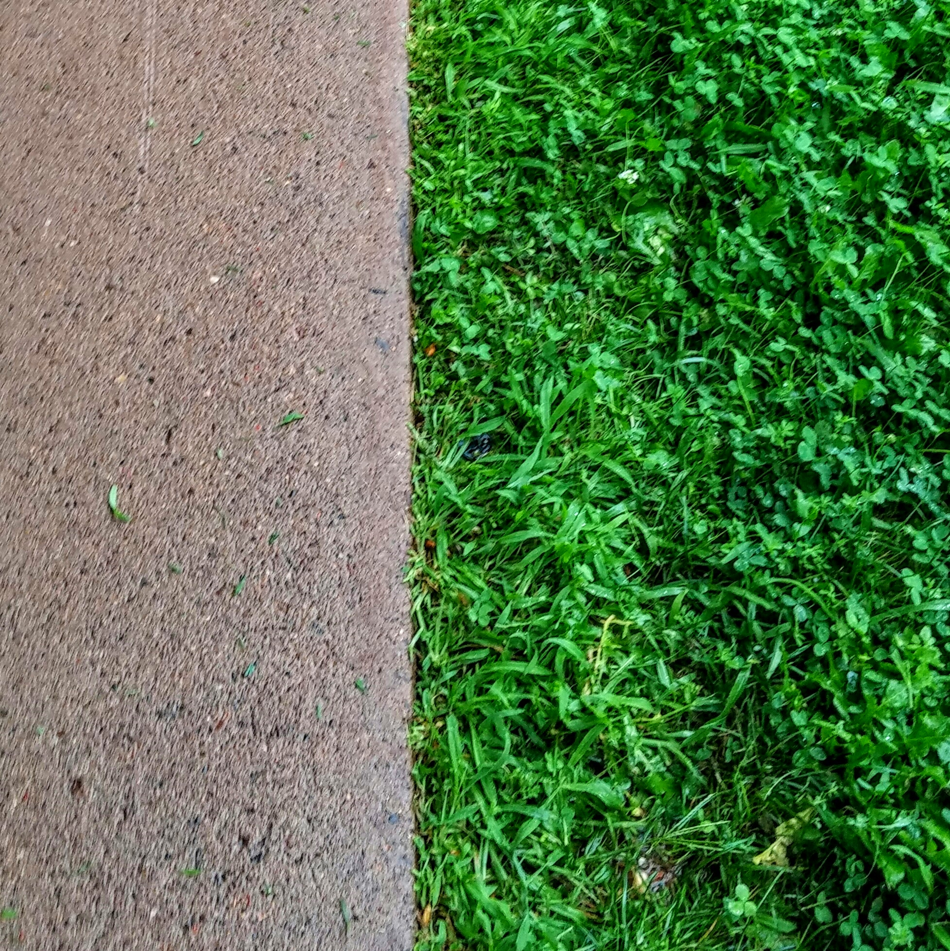 Ultimate Lawns - Edging - Mclean/Chippew Falls