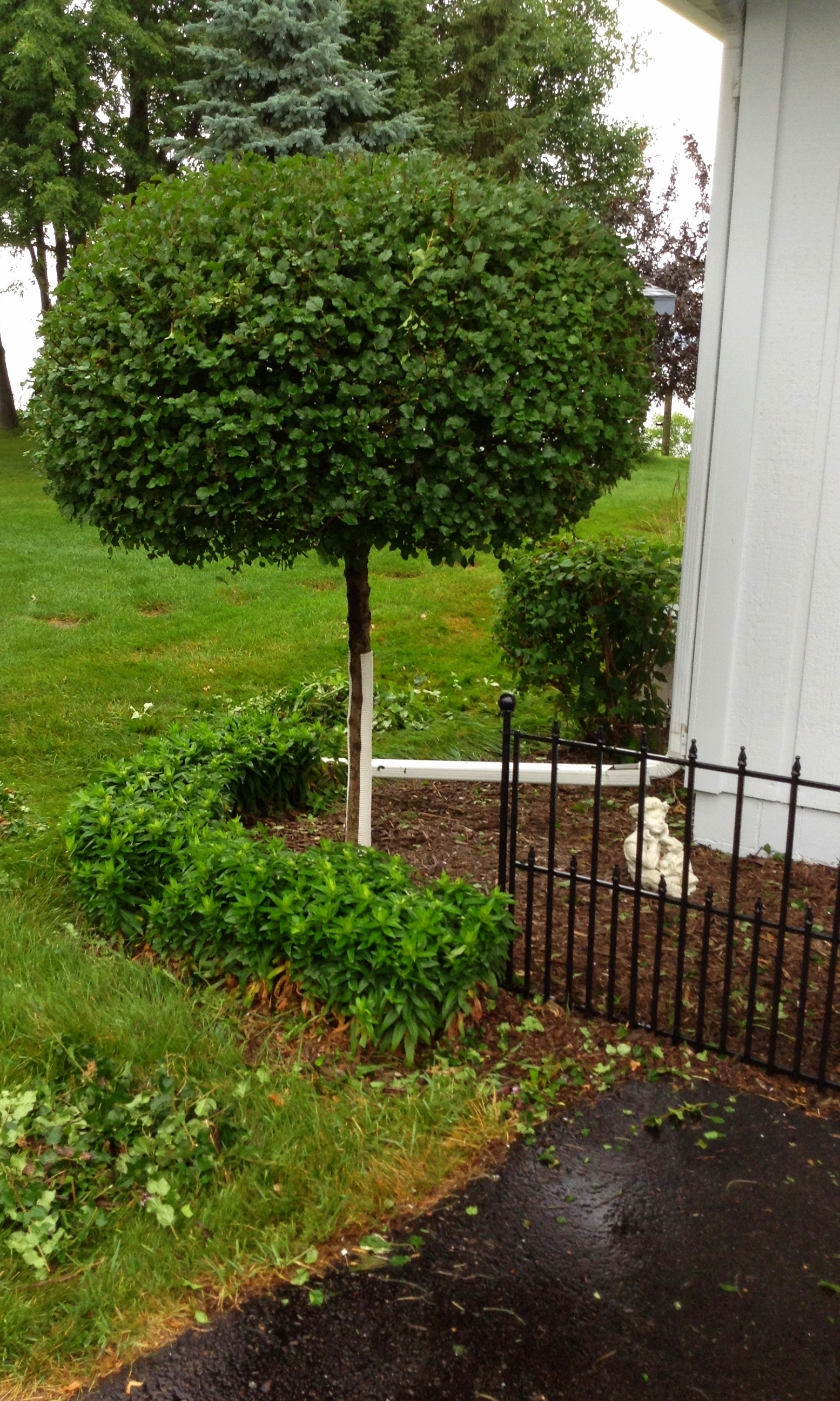 Ultimate Lawns - Shrub Trimming - Mclean/Chippew Falls