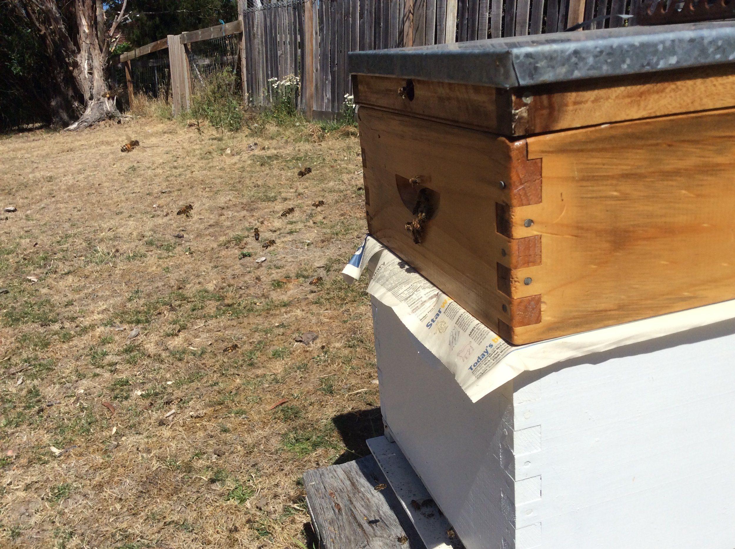 Papering two weaker hives.