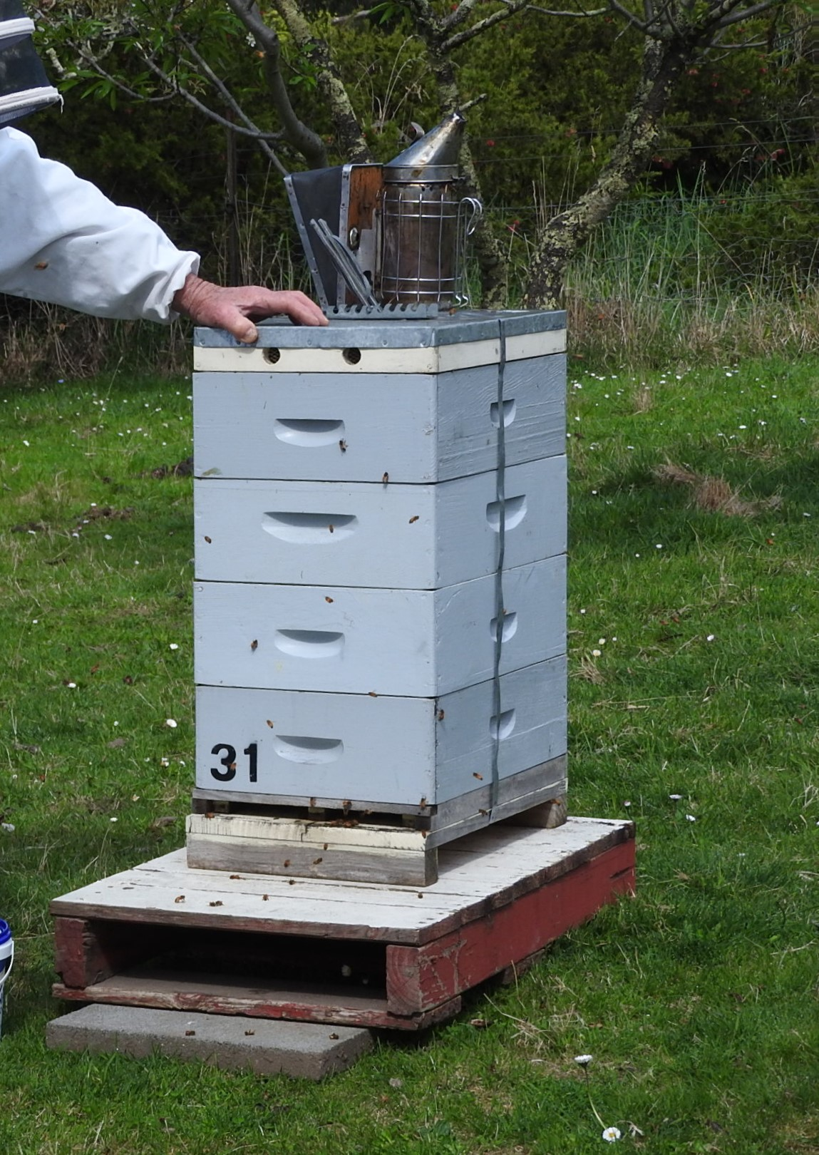 Langstroth Hive using all ideal boxes.