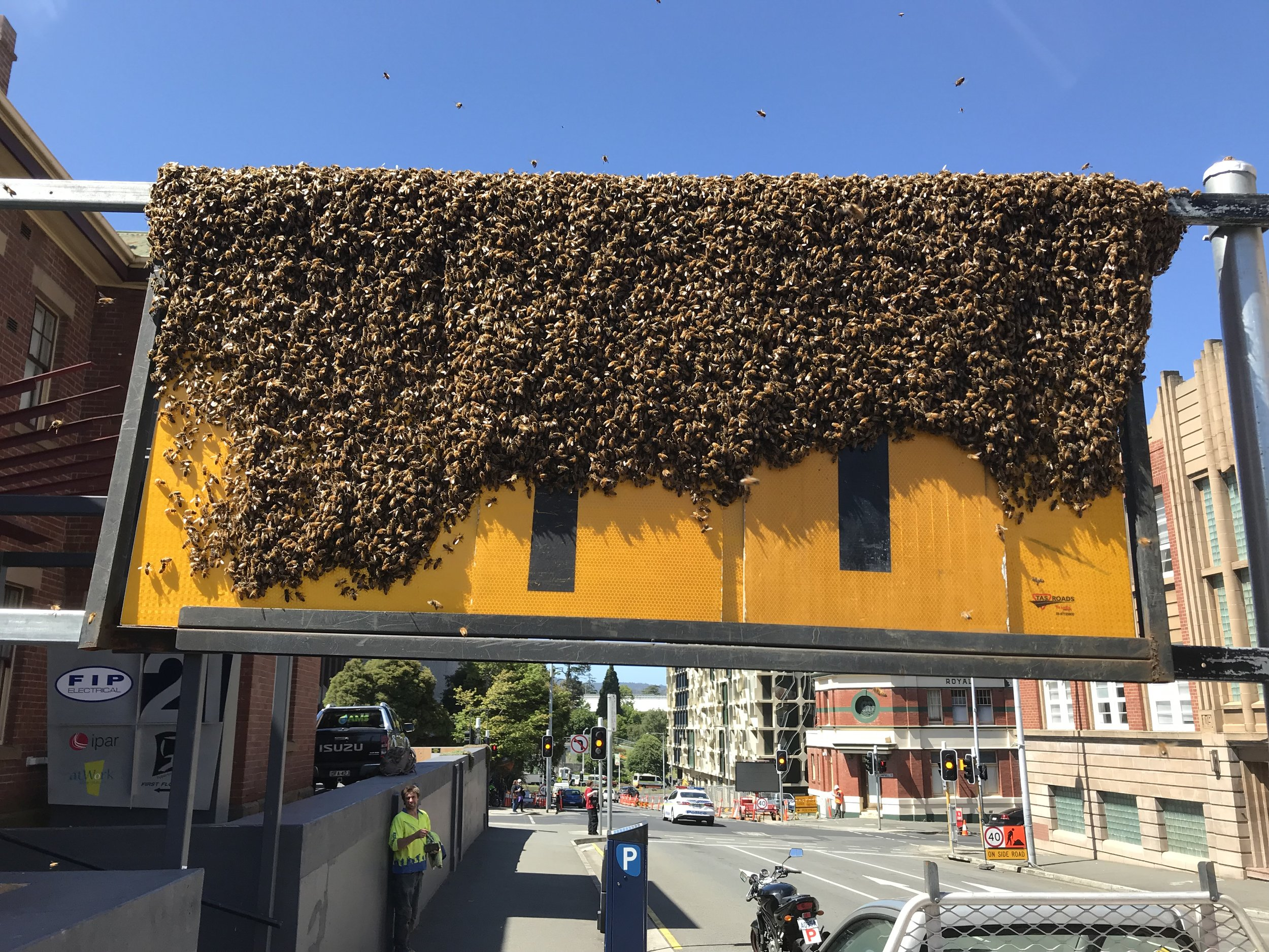The Swarm at Bathurst St Dec 2018