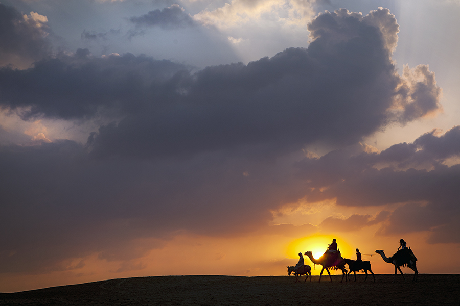 Donkey, Camel, Donkey, Camel