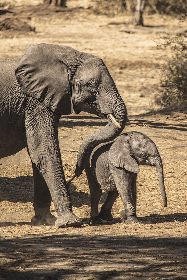 Mothers Touch