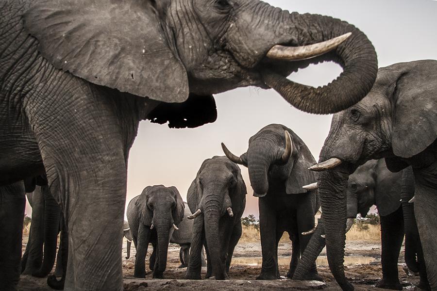 Elephant Sands