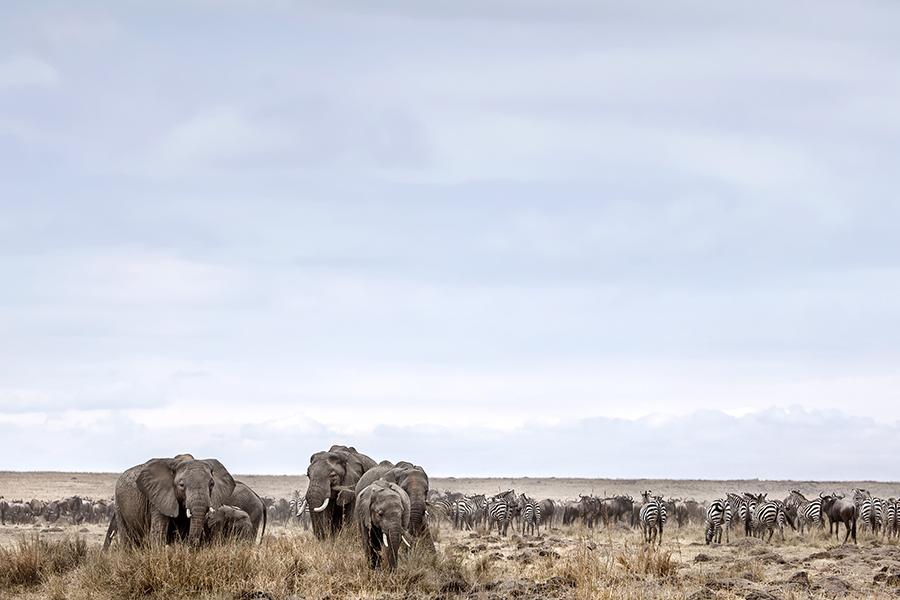Mara Herds