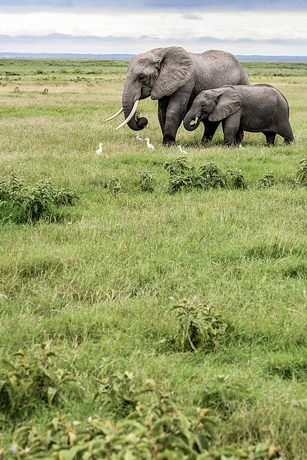 Amboseli Love