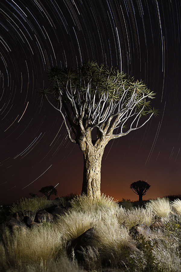 Quivertree Startrail