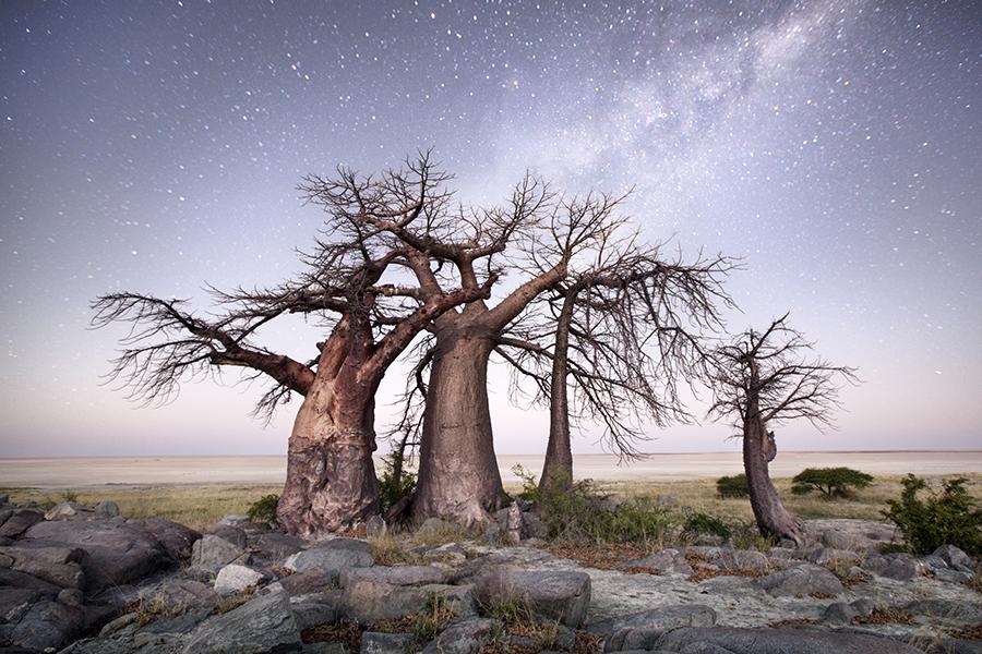 Baobab Blowout