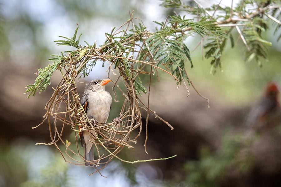Nest Inspection