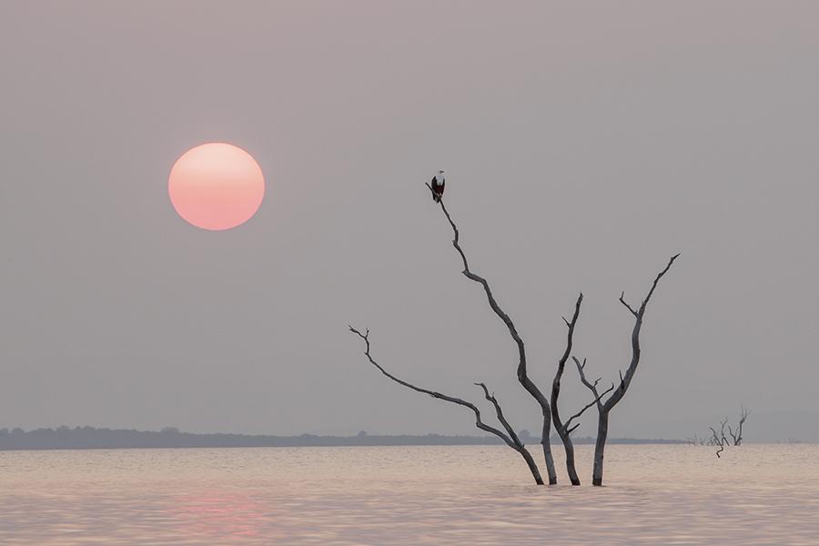 Fish Eagle Sunrise