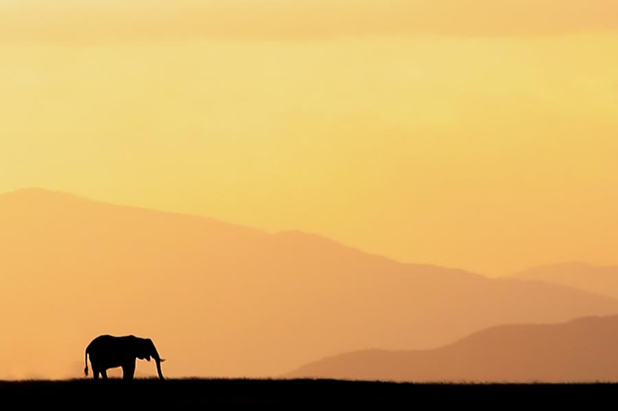 Amboseli Sunset