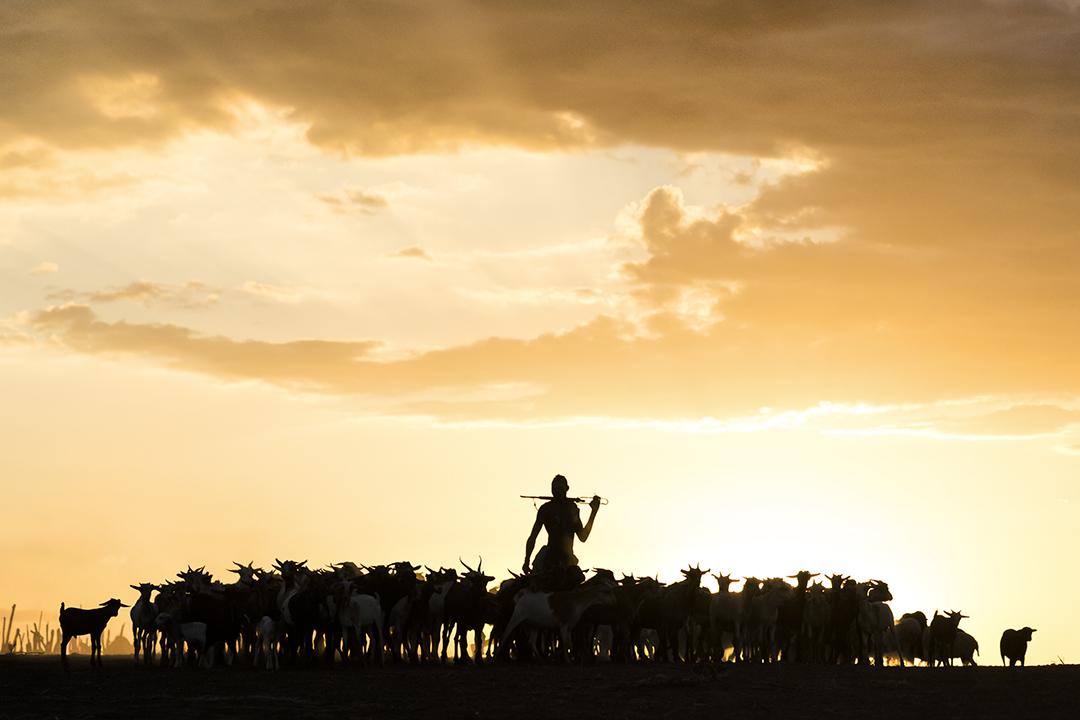 Kara Goat Herding