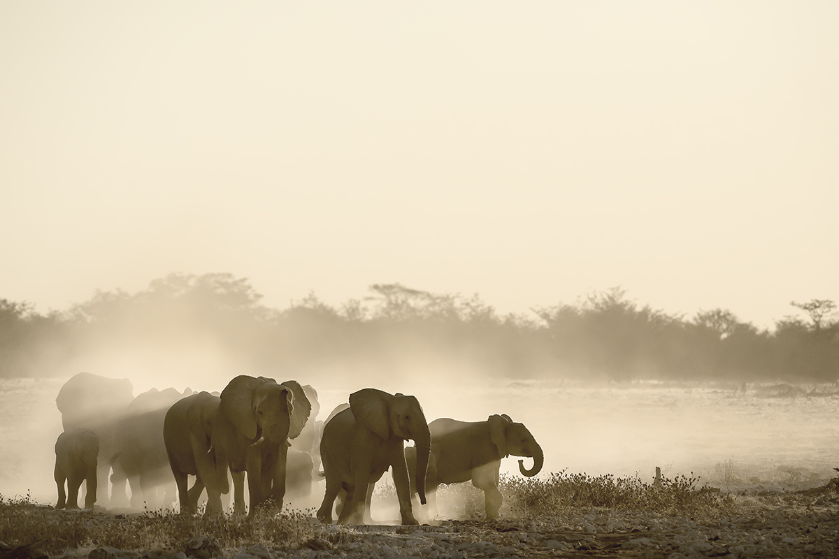 Towards the water hole
