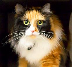 Cindy, adopted February 2016