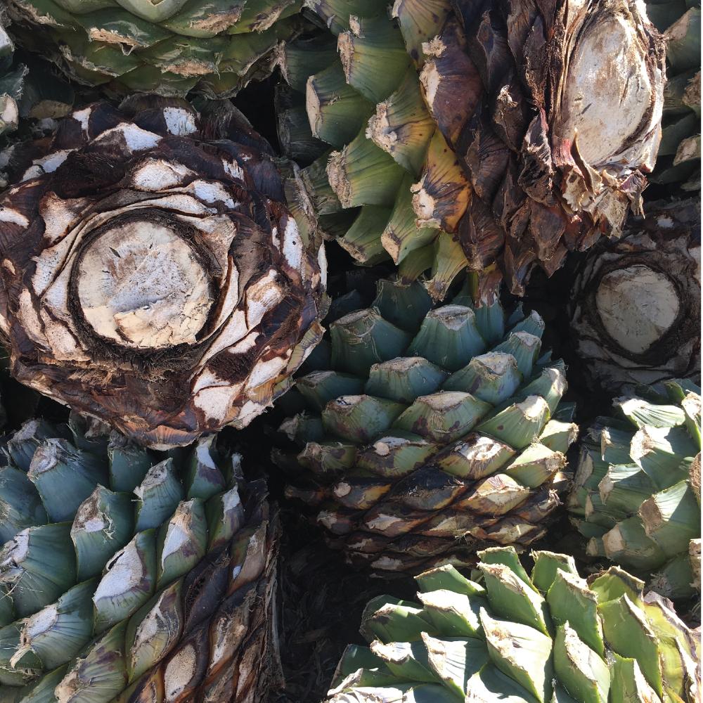 Oaxaca Agave Farm.png