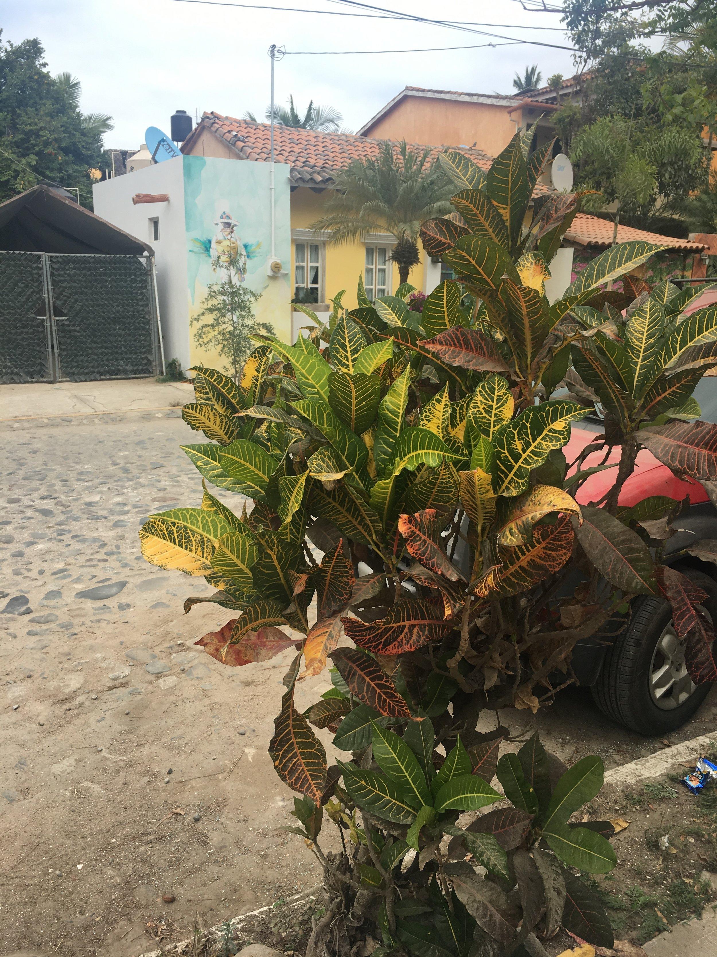 plants_San Pancho.JPG