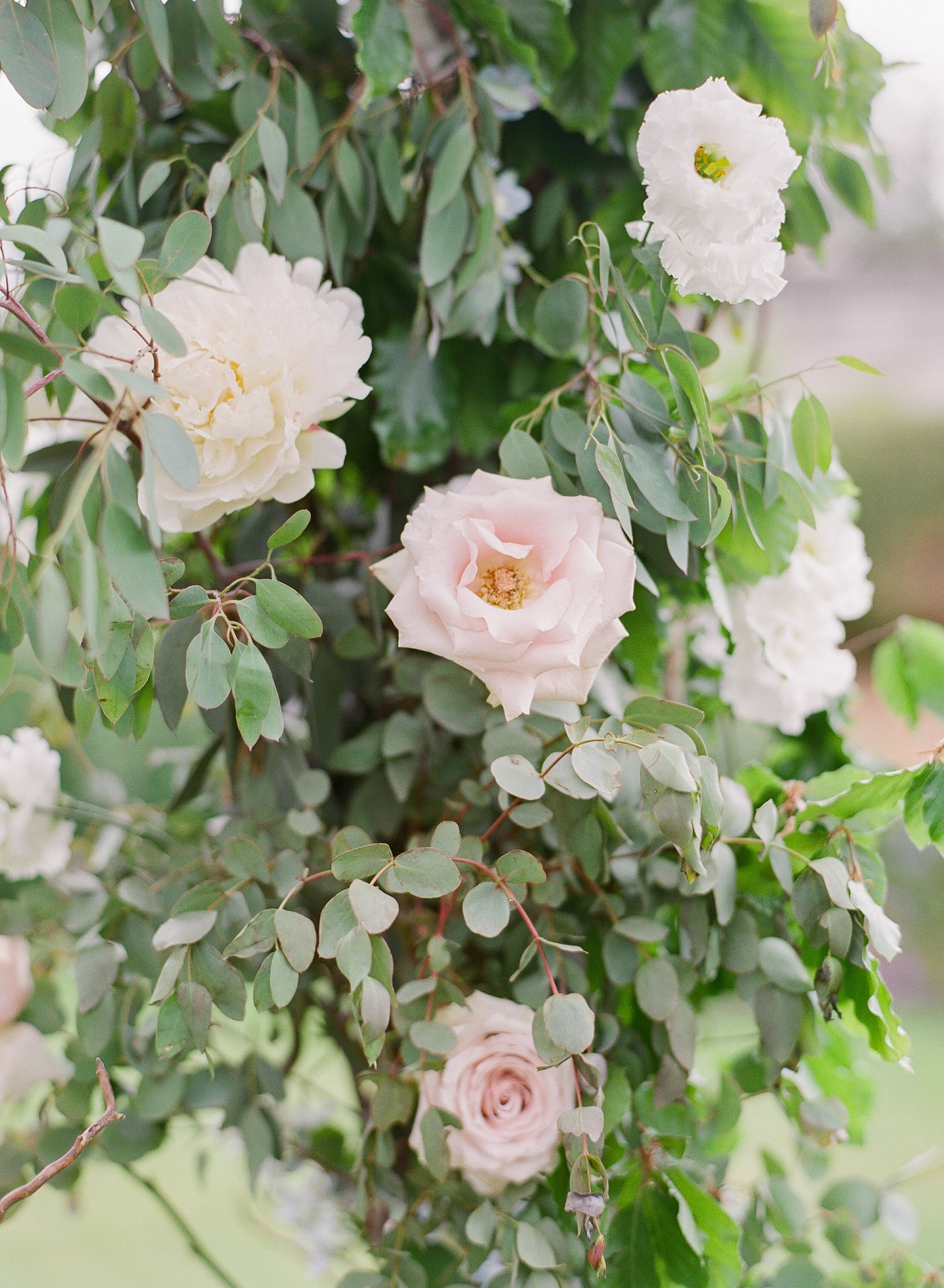 Bella-Botanica-Flowers-Molly-Carr-Photography-Ceremony roses