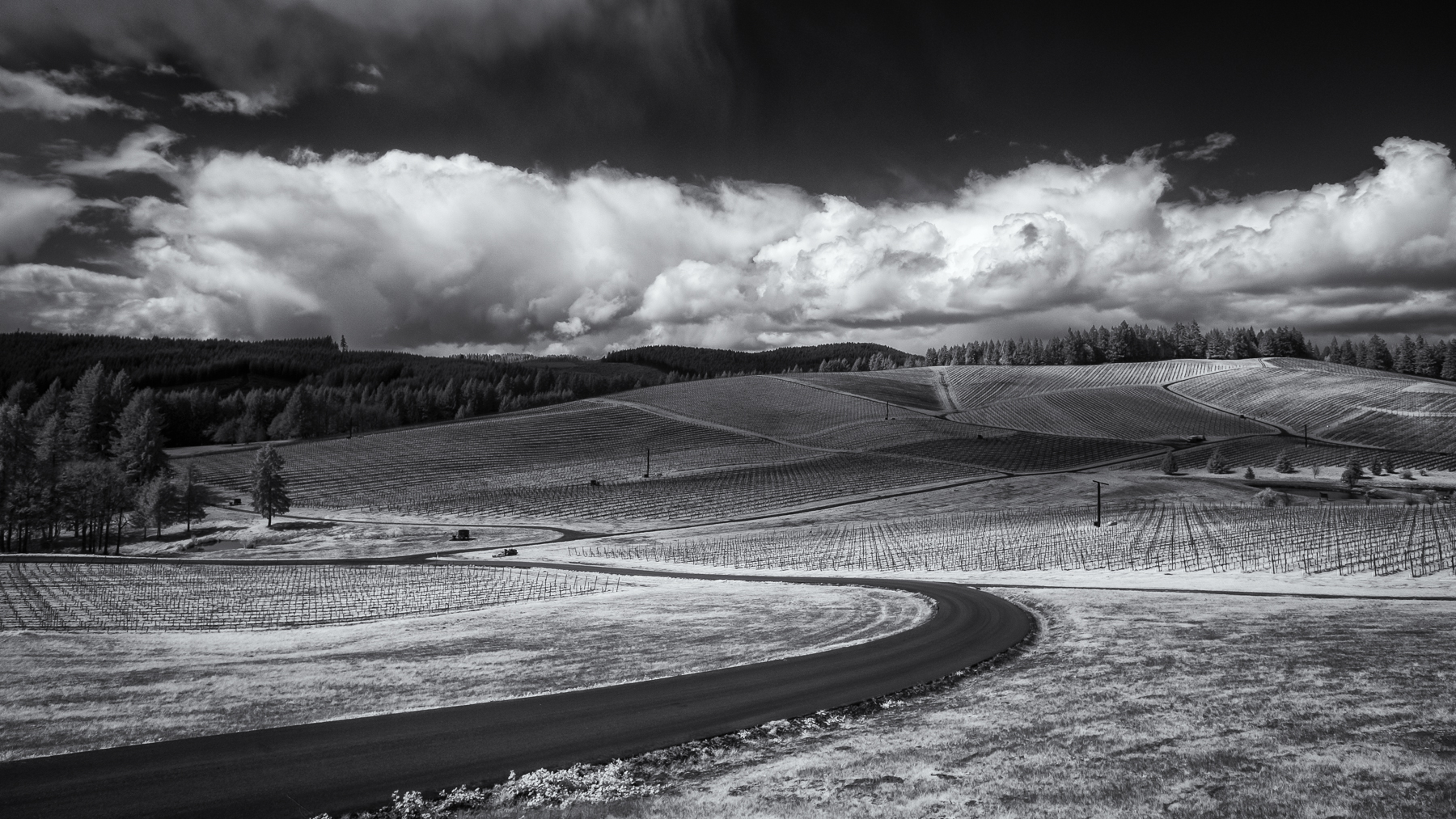Clouds over the Domaine vineyard
