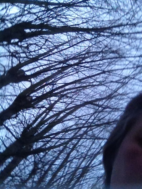 trees overbearing