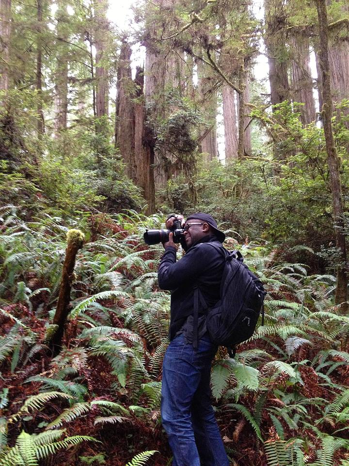 samite redwoods.jpg