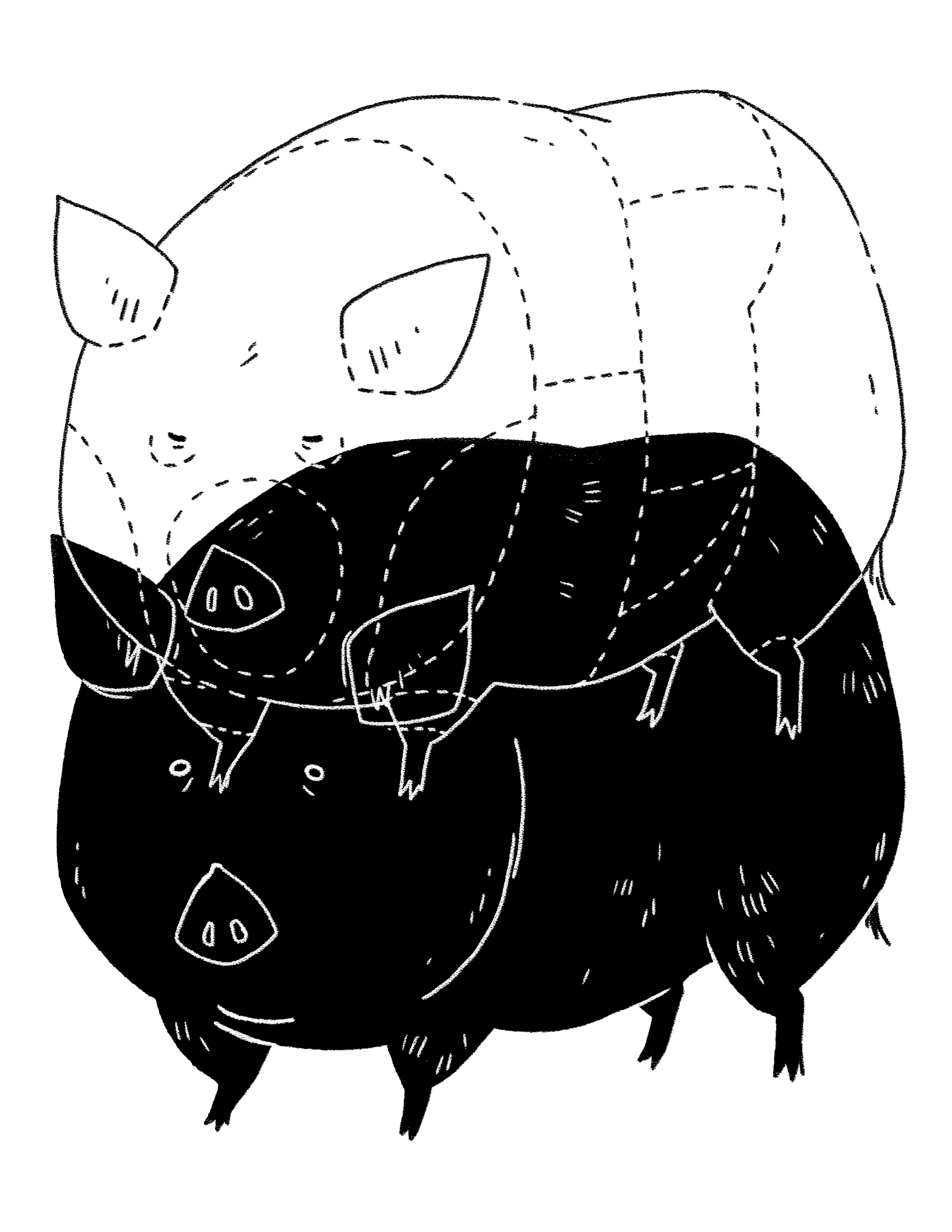 zodiac_0025_pig.jpg