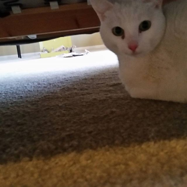 Salt loves the security of being under the couch