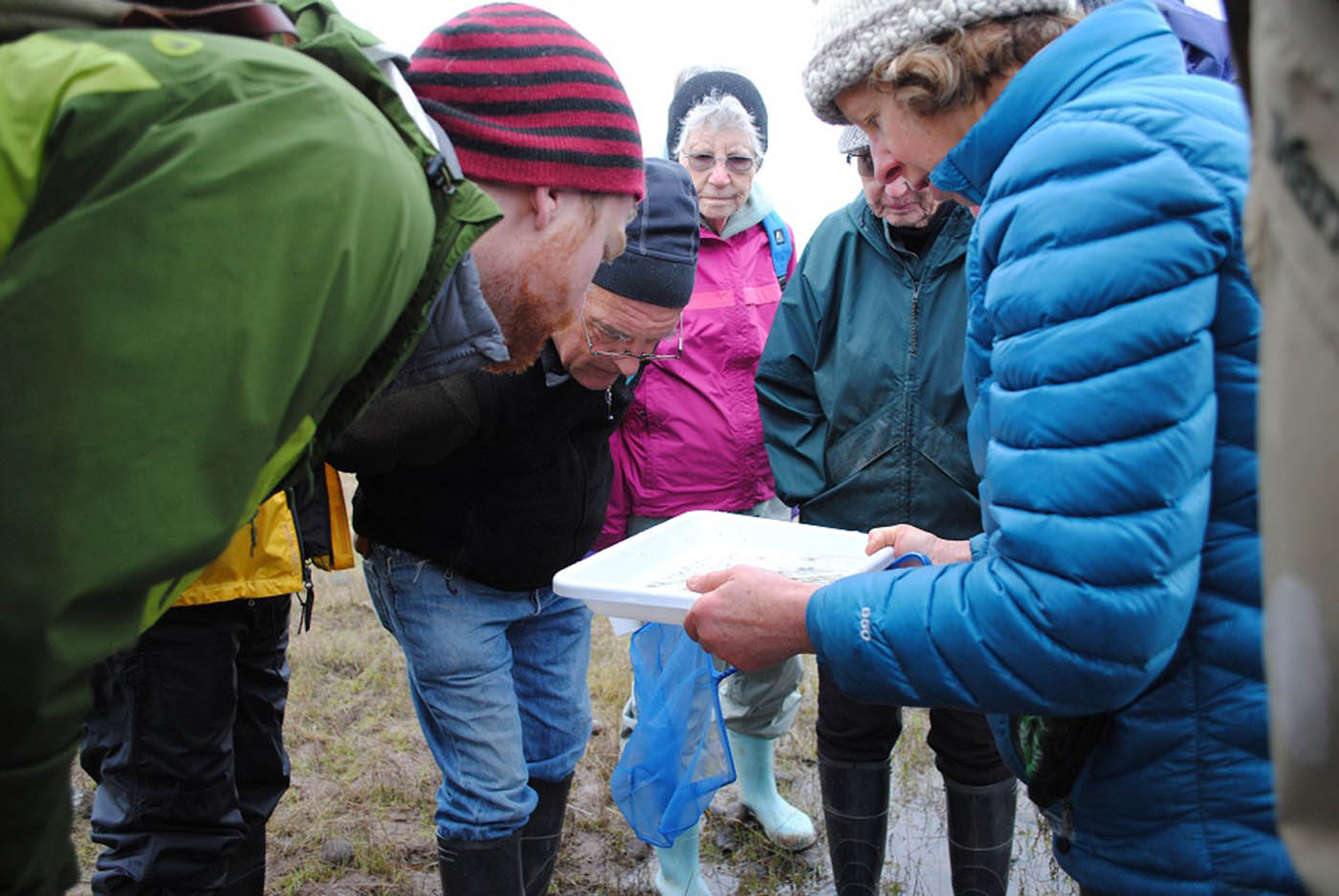 Molly Morison (on right) gathers volunteers to examine a water sample from a seasonal pool.