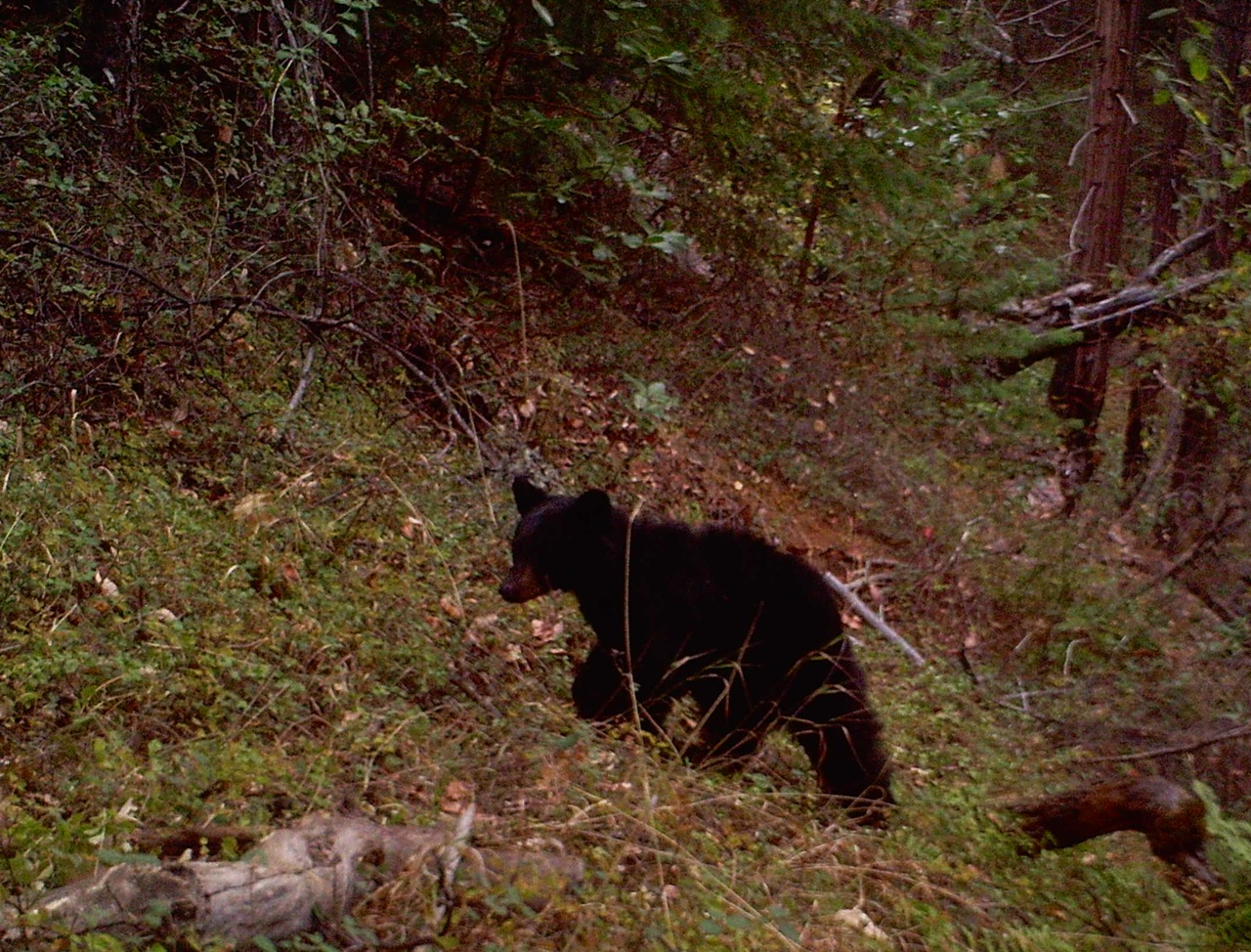 Creek attracts diverse wildlife