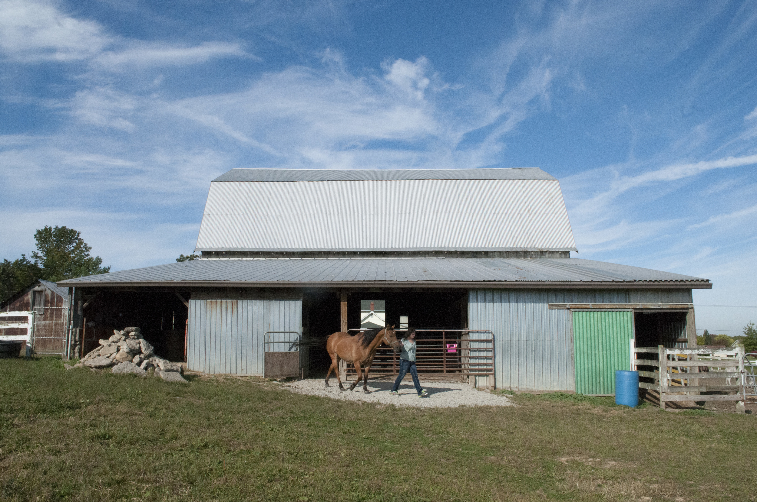 Tammy Tiedtke walks Switch out of her barn to stretch his legs after being assessed by the chiropractor. When the horses are not in their stables, they often roam around the four-acre area fenced off for them on the grounds (Sept. 27, 2014).