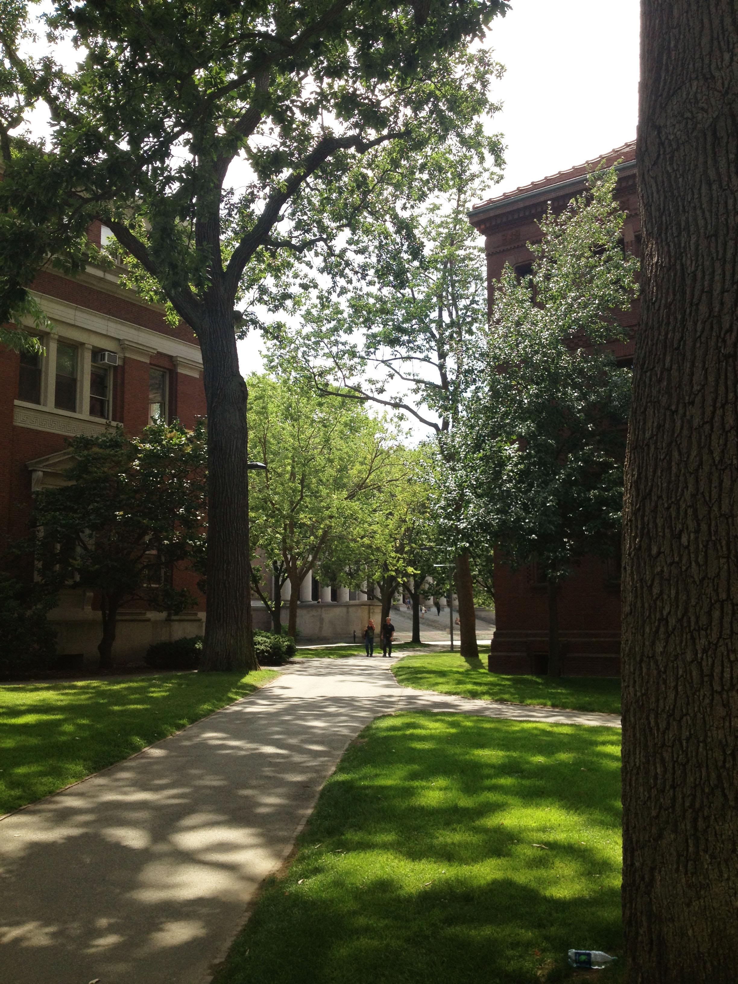 Harvard Yard During the Summer